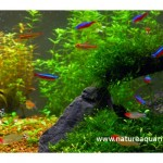 10 Highly Recommended Fishes For Planted Aquariums