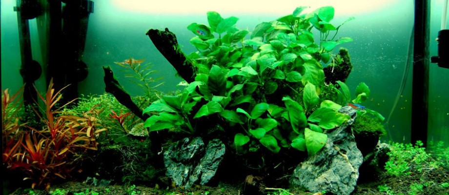 How To Set Up Your Own Fresh Water Nature Aquarium