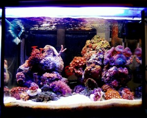 Salt water aquarium | nature aquarium