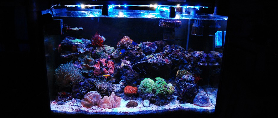 4 Essential Things To Know About Salt Water Aquarium