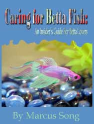 Betta Fish Guide