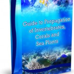 What Is Coral Fragging and Its Benefits