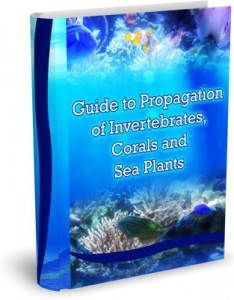 Invertibrates, Coral and Saltwater Plant Propagation Guide