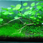 Planted Tank by Monark