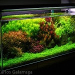 Dutch Style Aquascape Design