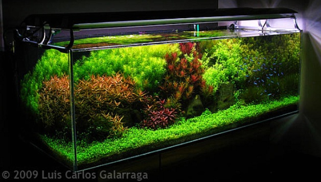 Dutch Style Aquascape Design Nature Aquariums
